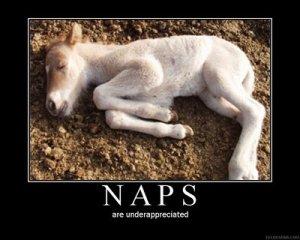 NapsPoster-783775